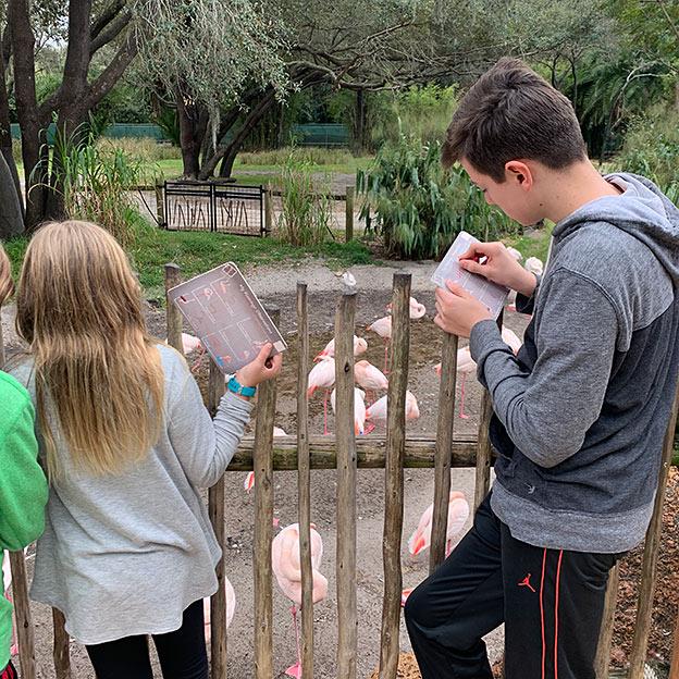 Observing Flamingo Behavior at Animal Kingdom Lodge