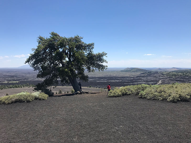 craters of the moon hike tree family